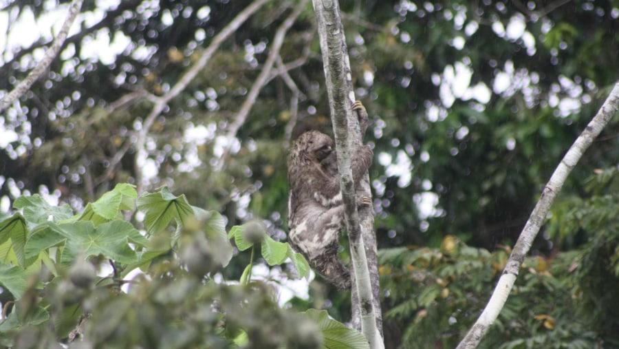 resting on the tree iguana lodge