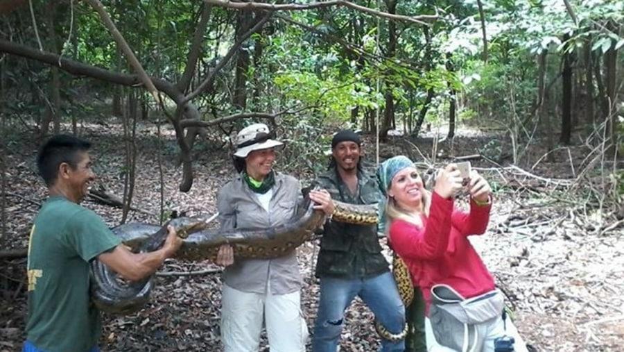 An anaconda