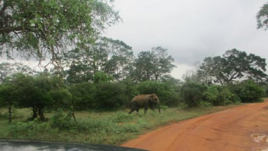 GetGo Tours - Yala National Park