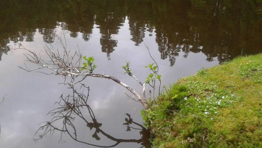 Mirror, mirror.. (lagoa da Falca, Terceira)