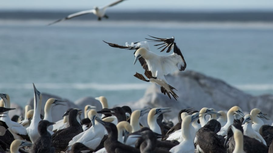 Lambertsbay Bird Island Reserve