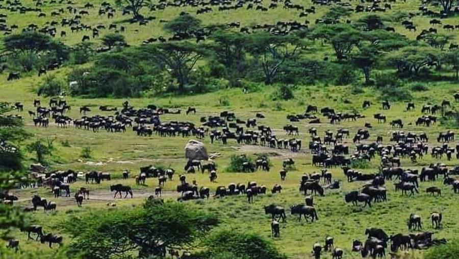 Wild animals migrations