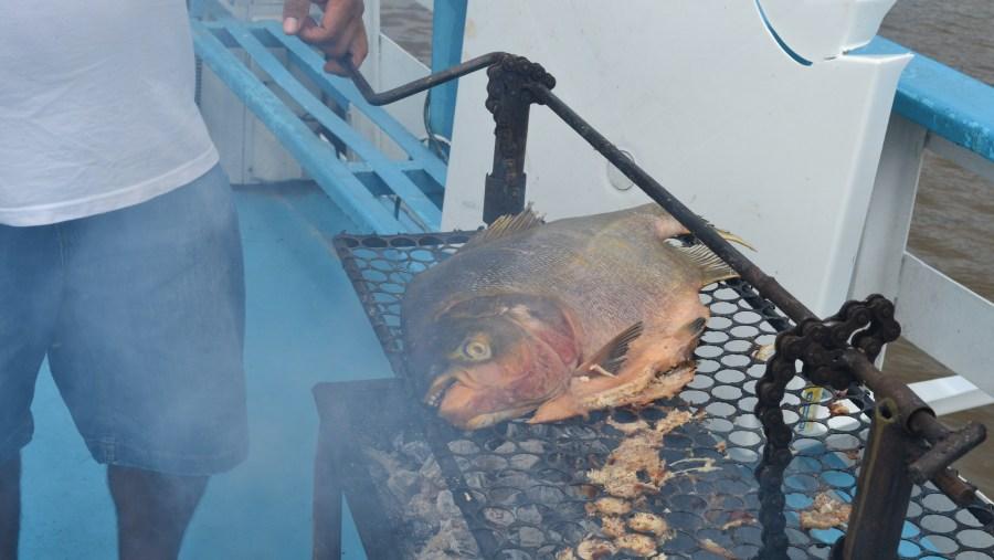 piranha for lunch!