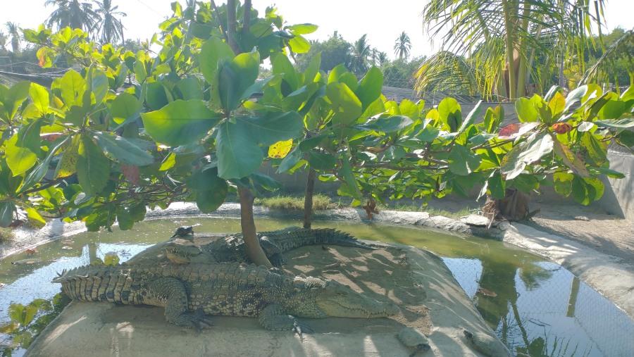 crocodile sanctuary
