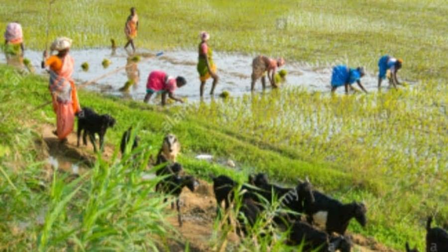 Village Indian women working
