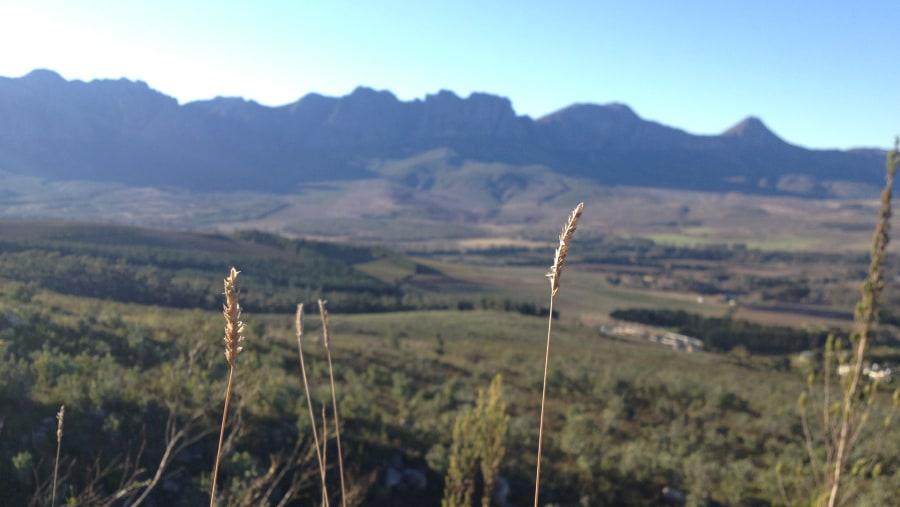 Fynbos Medicinal Plant Walk