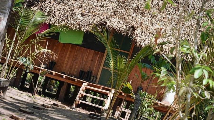 Amazon Jungle - Ayahuasca Retreat