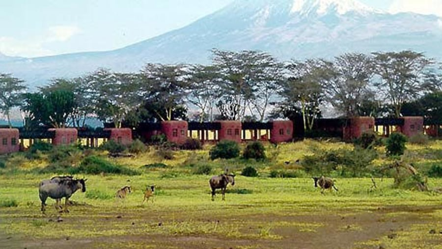 Wildebeest near lodge and Kilimanjaro mountain at the back-drop.