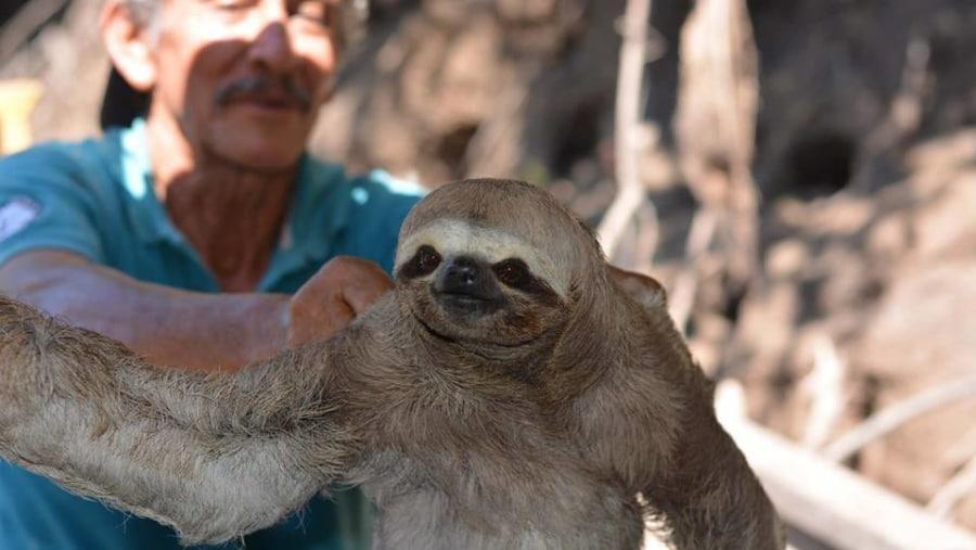 Gilbert the Shaman and a Sloth