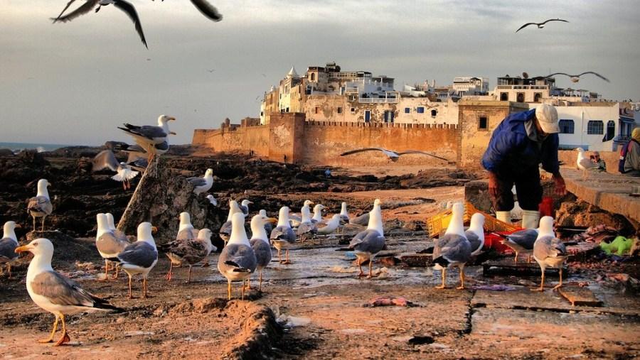 Explore Essaouira at Atlantic coast