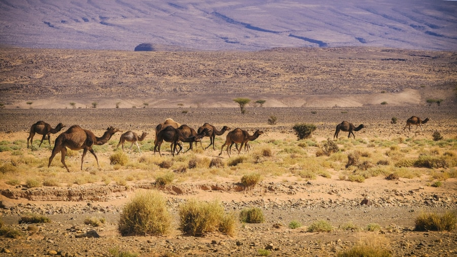 The best Guided Tour in Morocco Desert