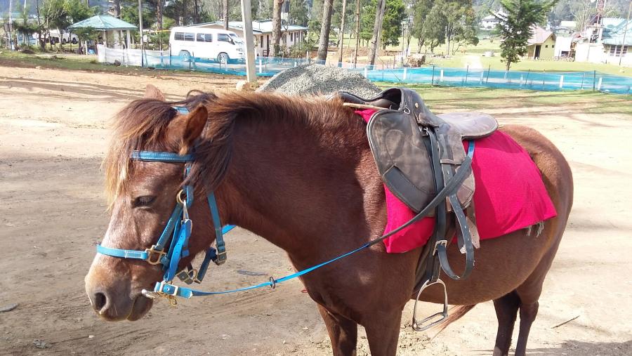 horse Wriding