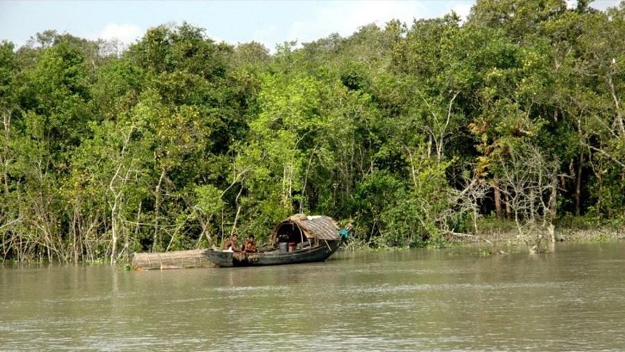 Sundarban, Mangrove forest