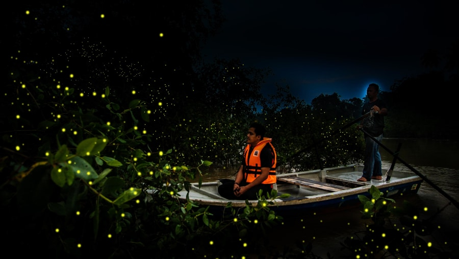 Firefly Watching at Mangrove Area