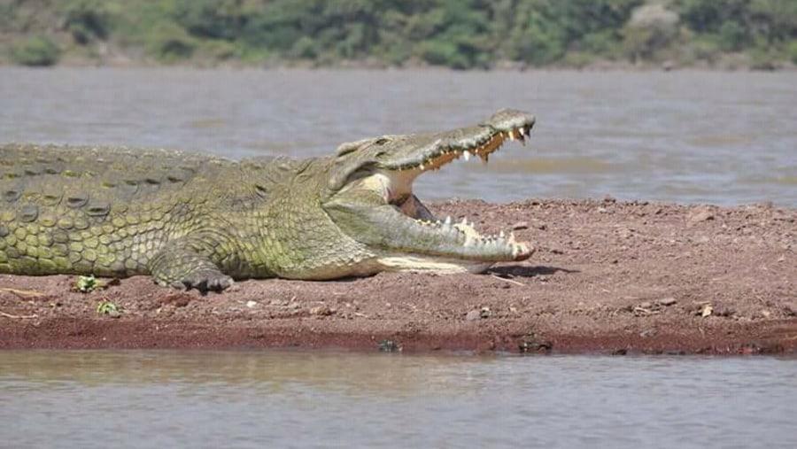 Nile crocodile @ LAKE CHAMO