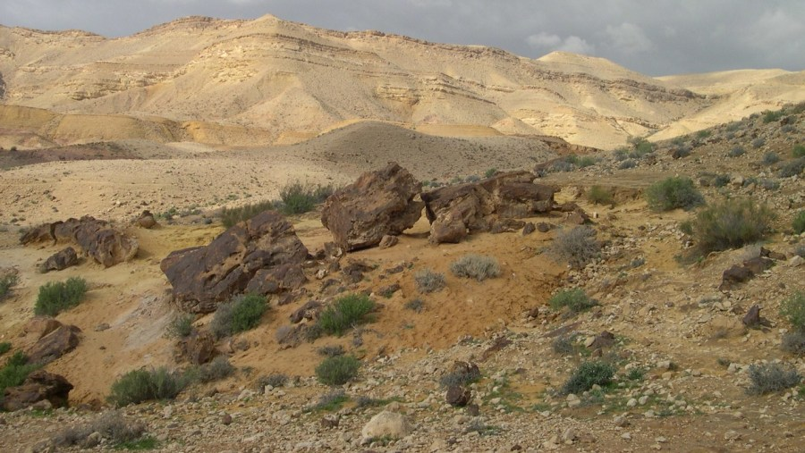 Petrified trees in Large Makhtesh