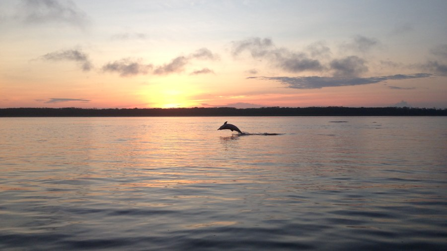 Gray dolphin and sunrise