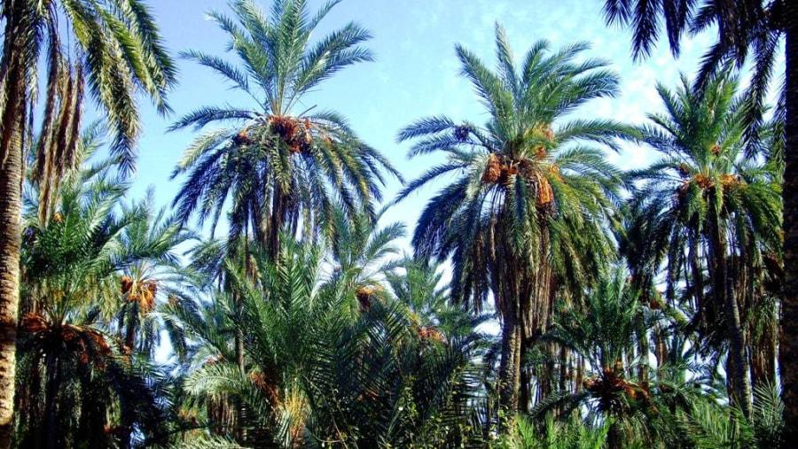 the oasis of tunisia