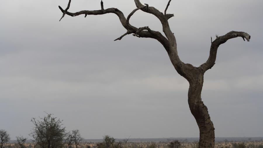 Bushveld scene