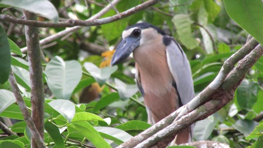 Aves endémicas La Tobara - Las Islitas - San Blas Nayarit México