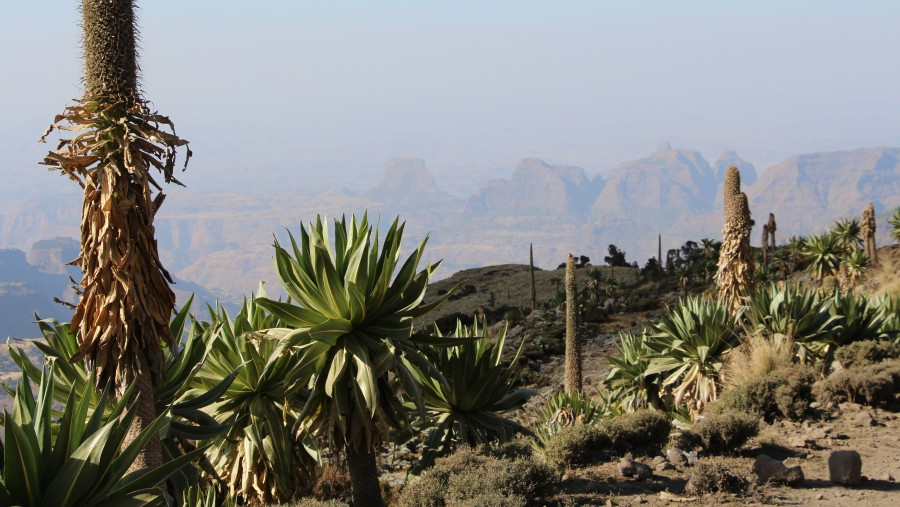 Amazing trekking in Simien mountains