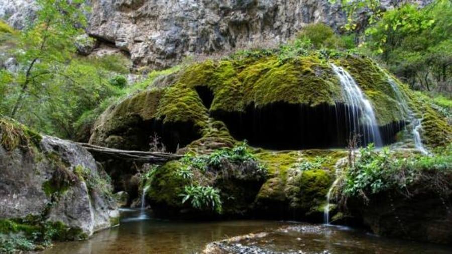 Waterfall Mossy Umbrella