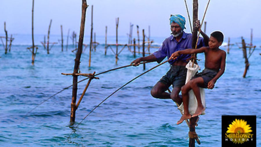 Stilt Fishing - SRI LANKA.  An age old method of catching fish, very primitive and poor in results terming with today's commercial fishing perspective, but ads on beauty and uniqueness to the countries deep south coast line, as a icon of the fishing folk in Sri Lanka. A major attraction at the south cost, stilt fishing till date is continued by the locals owing to the good will gifts by the locals and the foreign visitor that adds on apart to the catch from the sea.  Explore Sri Lanka with, SUNFLOWER HOLIDAY LK - Sri Lanka. Skype : sunflower_holiday E-mail : sunflowerholidaylk@gmail.com sunflowerholidaylk@yahoo.com