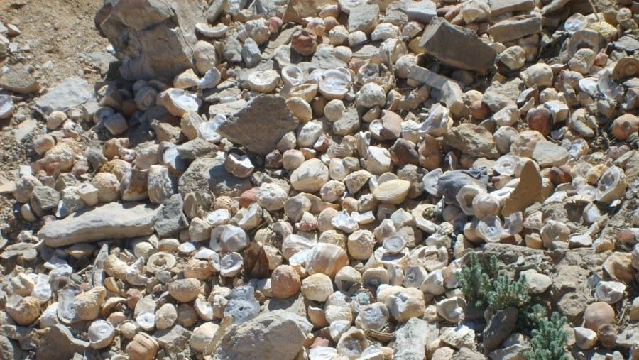 crystal In the top of El Gona mountain