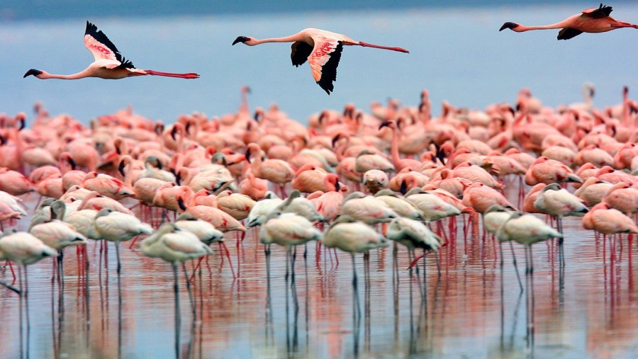 Flamboyant of Flamingos