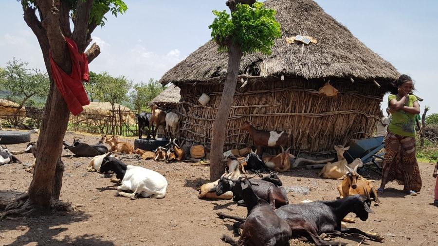 Village of locals around Awash National PArk