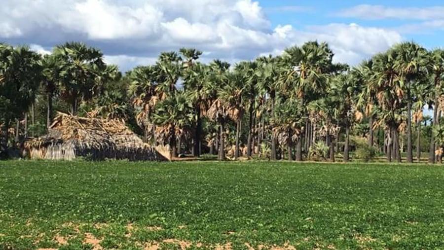 a hut in Palm tree garden