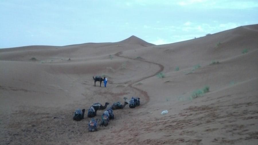 sahara trip tour