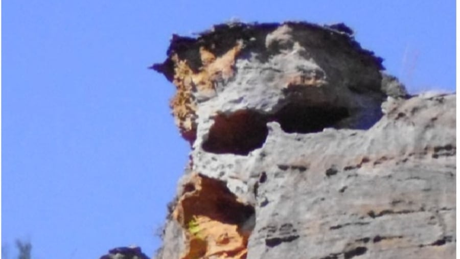 head skeleton in National Park
