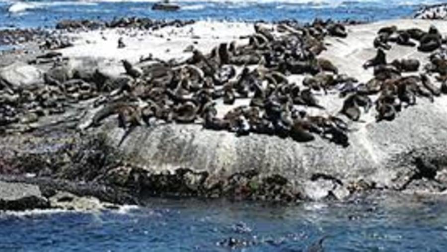 Hout bay seals