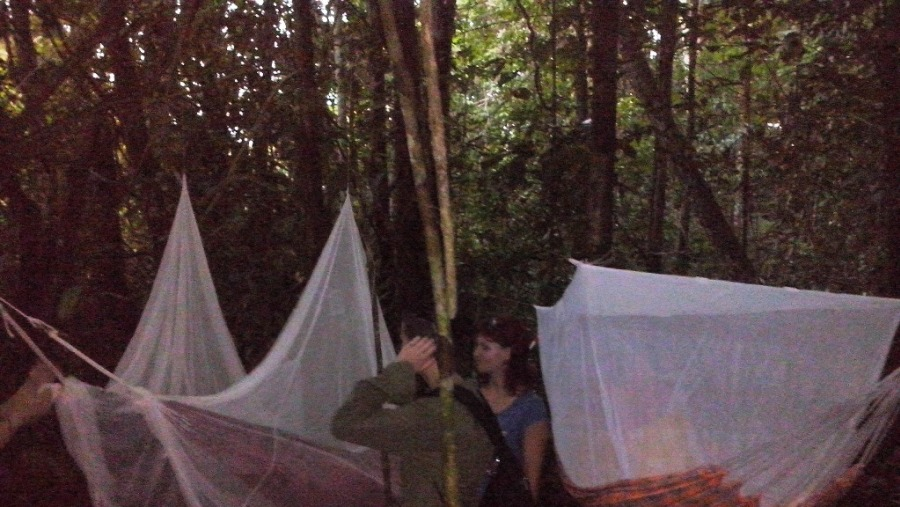 Bed time in the jungle