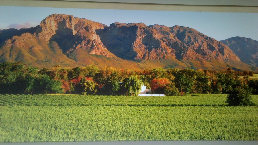Winelands Tour n Tasting