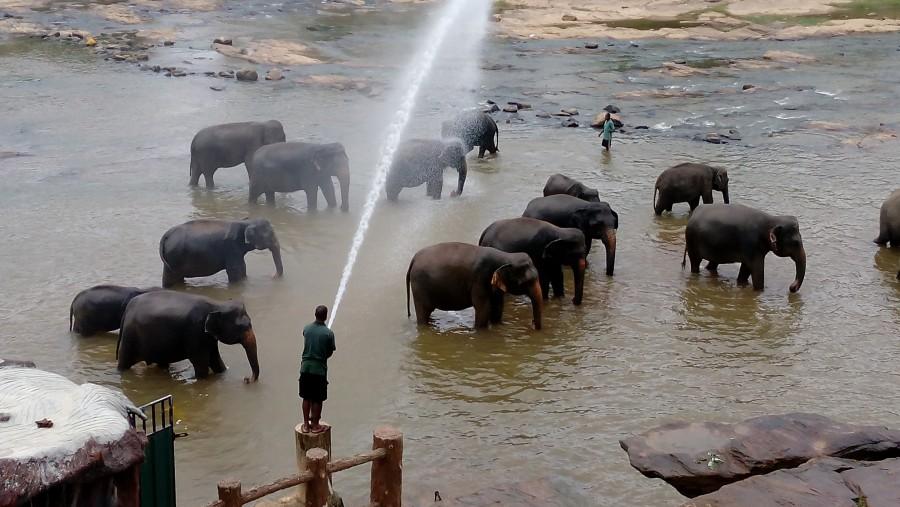 Bath eliphant