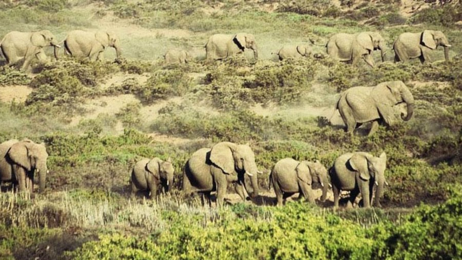 desert elephants - Namibia. Photo by Philippe Laporte