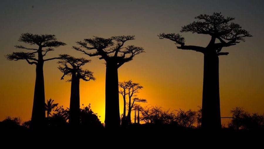 Madagascar Tour guide