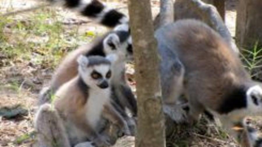 An chéad turas i Madagascar