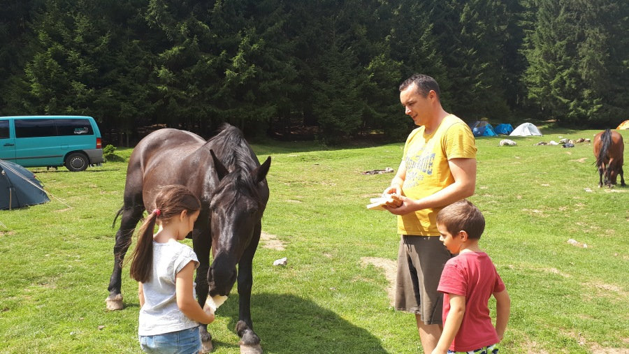 Camping with horses in Padis - Apuseni Mountains