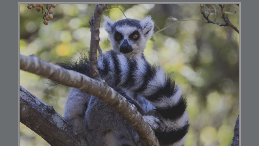 Round Trip Madagascar