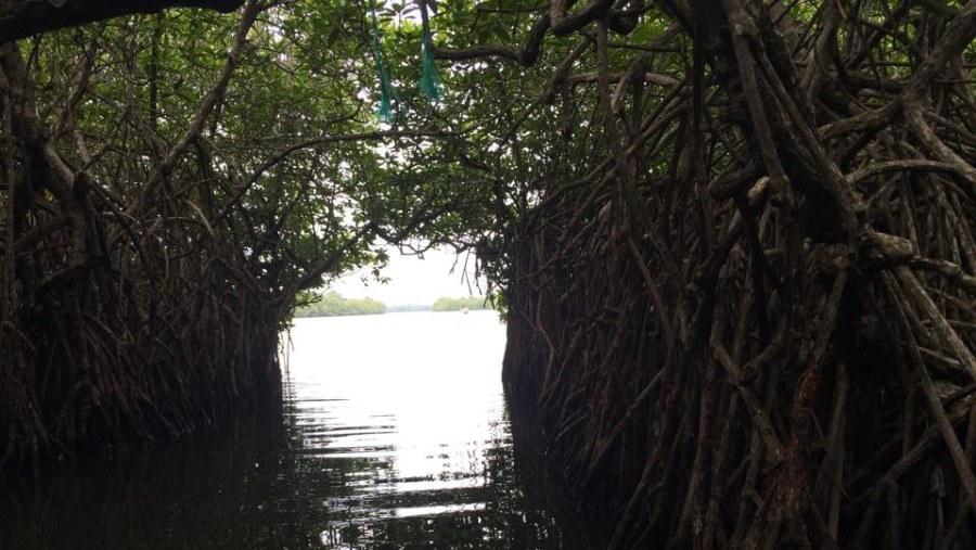 Mangrove Madu River