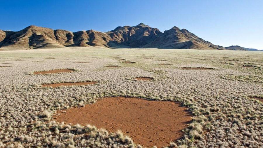 Fairy Circles in the Namib