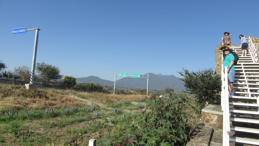 Tequila Volacno and Agave Landscape