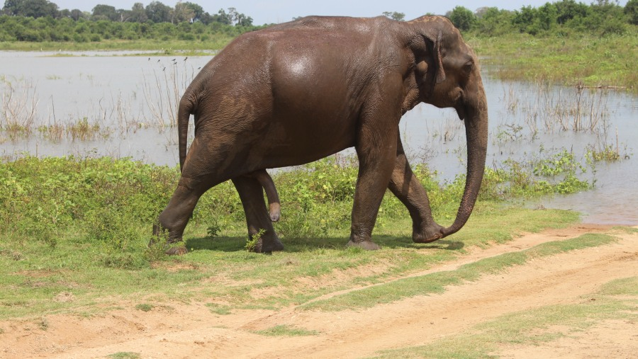 Ceylon Trip