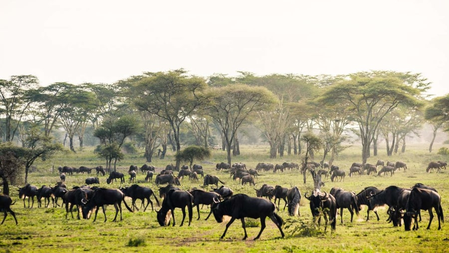 Game drive in Mgorongoro ctrater