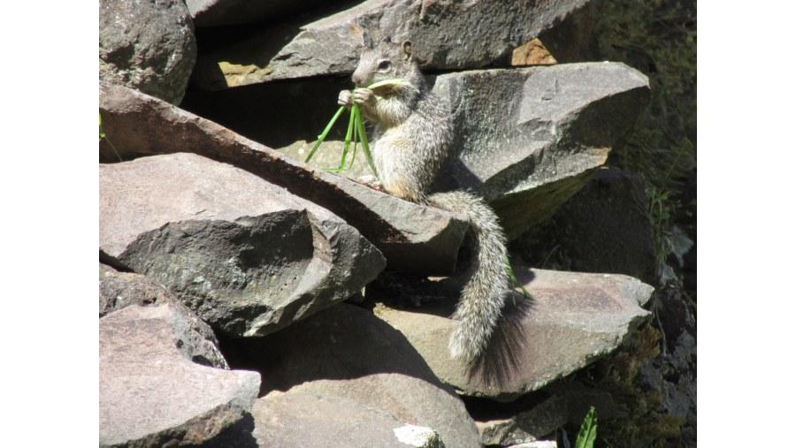 Vida silvestre en sitio arqueológico