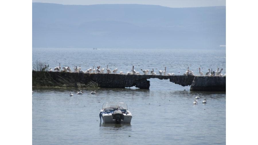 Ribera del lago