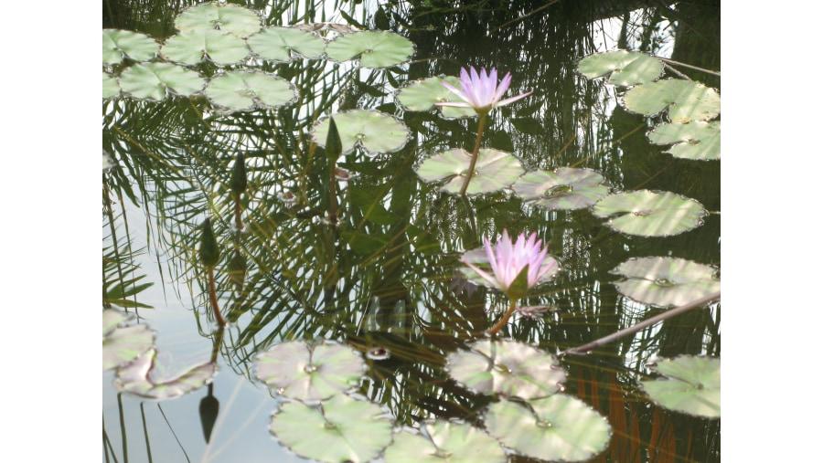 Floating gardens